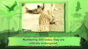 10 حیوانی که نسلشون ممکنه در 10 سال آینده منقرض شه