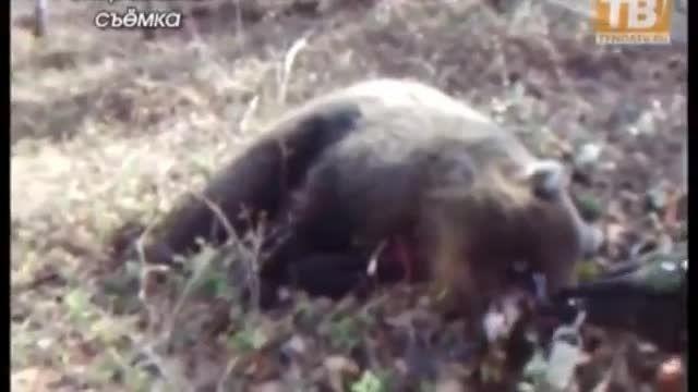 زنده ماندن زن پس از حمله خرس +18