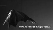 راز پرواز دیدنی و جذاب خفاش