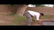 کاشت نهال گوجه فرنگی در فتح آباد رشتخوار