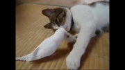 بیدار کردن گربه توسط مرغ عشق؛ دوستی گربه و مرغ عشق