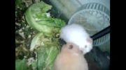 همسترهای گوگولی مگولی من
