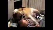 علاقه این سگ به بچه!!!