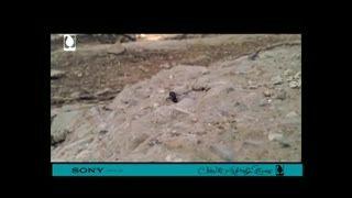 فیلم موبایلی مورچه ها، راه یافته بخش اصلی