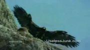عقاب قدرتمند