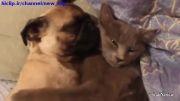 دوستی سگ و گربه و بغل کردن همدیگر......