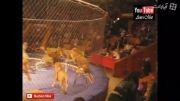 حمله خفن شیر به مربی سیرک  (جدید)