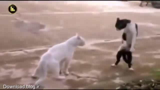 گربه ی کاراته کار
