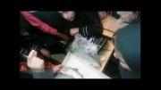 تشریح ماهی در کلاس های تابستان - فیلم 4