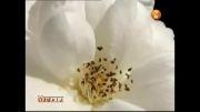 جان مریم با صدای محمد نوری
