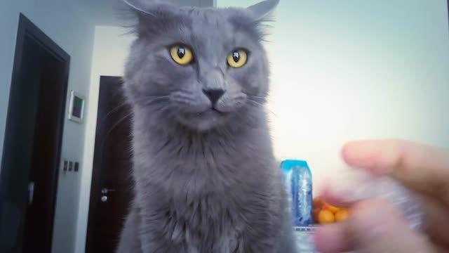 عکس العمل جالب یه گربه !!
