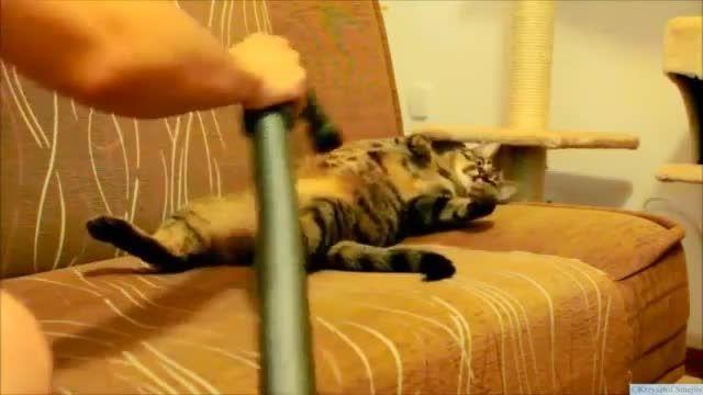 ماساژ دادن گربه با جارو برقی