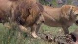 نبرد در طبیعت و حیات وحش