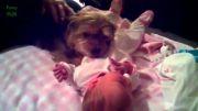 مراقبت باحاله سگها از بچه های کوچیک  :D