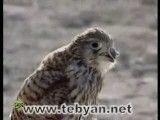 حیات وحش استان بوشهر-2