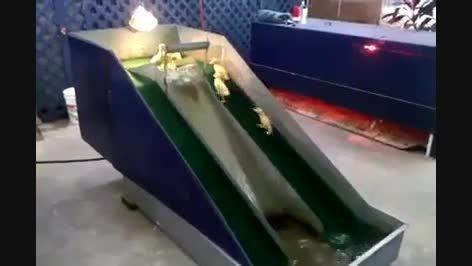 سرسره بازی بچه اردکها
