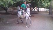 اسب کرد صحرا