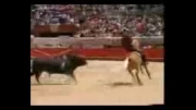 حرکت های زیبا و جالب با اسب