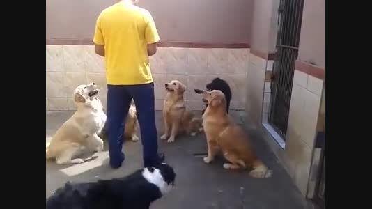 غذا خوردن سگهای باتربیت