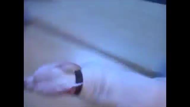 کلیپ های خنده دار از لحظات ترسیدن حیوانات جلوی دوربین