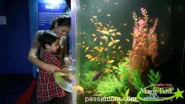 دنیای زیر آب پاتایا/تایلند (underwater world pattaya)