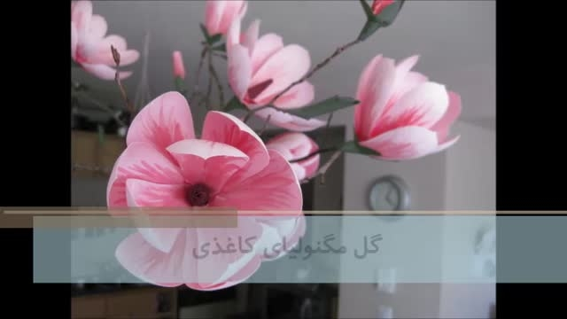 گل مگنولیای کاغذی | یومیک