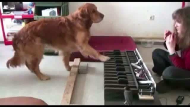 آموزش موسیقی به سگ