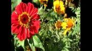 شهد گل