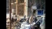 کبوتر پلاکی امید مسلمی(میانه)