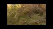 طبس در مستند حیات وحش ایران - شبکه ZDF آلمان
