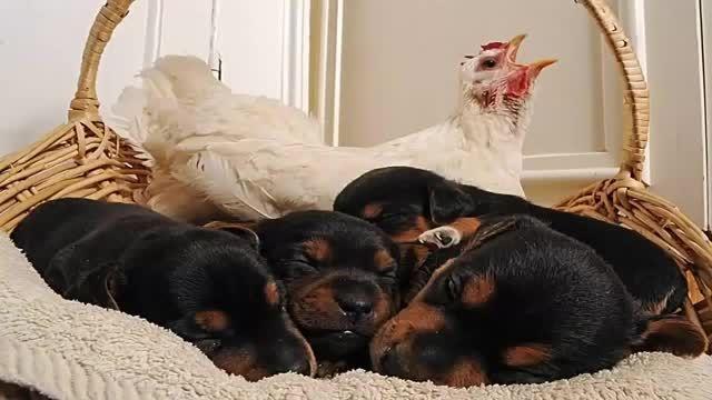 حیوانات مختلفی که با هم مثل یک خانواده زندگی میکنن جالب
