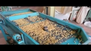 سورتینگ 3 کاره و 5 کاره آجیل و خشکبار نوین صنعت
