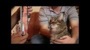 عکس العمل گربه به عکس هیتلر