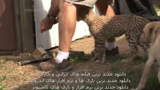 خلاصه ویدیو دوستی میان سگ و یوز پلنگ