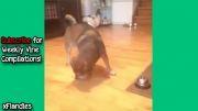 چند ویدیو برتر خنده دار از سگها!
