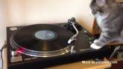 DJ CAT :)