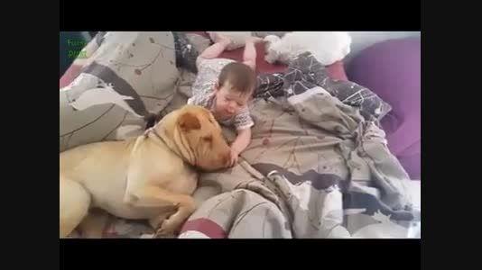 تفاوت رفتار وحشیانه انسان با بچه و حیوان با بچه