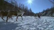 ویدئو زیبا از فصل زمستان (HD)-قسمت دوم