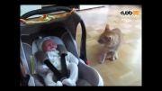 واکنش گربه ها به خواب نوزادان