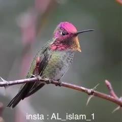 پرنده زیبایی که رنگش عوض میشه!