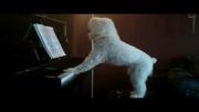 سگ با استعداد