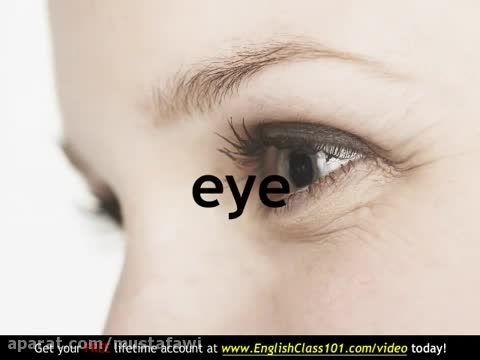 آموزش کلمات جدید زبان انگلیسی (اعضای بدن) 2