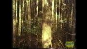 وضعیت جنگلداری در سال 1991