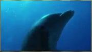 نجات دادن سگ توسط دلفین از دست نهنگ:|