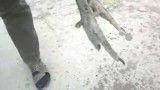 فیلم طاووسی-رد خون