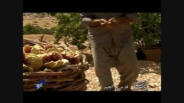 پیک آشنا (فارس - انجیر)