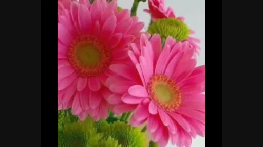 آهنگ و تصاویر زیبا از گل های زیبا