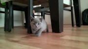 سر کار گذاشتن خنده دار گربه ها......