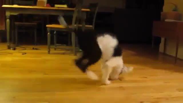 لحظات جالب با سگ ها و گربه های خانگی خیلی خنده دار
