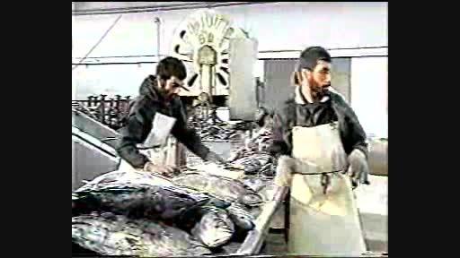 از ماهی تن تا کنسرو ماهی